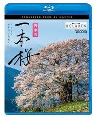 日本の一本桜  4K撮影作品【BD】