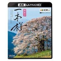 日本の一本桜 【4K・HDR】【UBD】